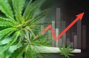 inwestycja w marihuane